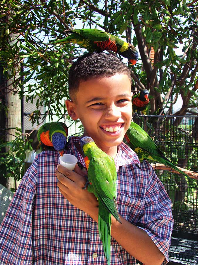 child with many lorikeets on him