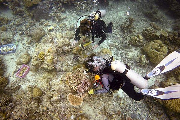 Divers looking at coral
