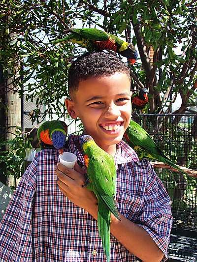 child with many lorikeets on him - thumbnail