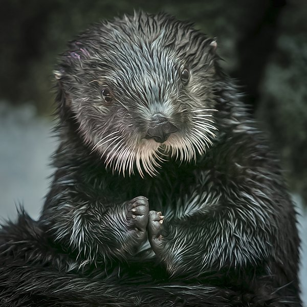 Betty the otter